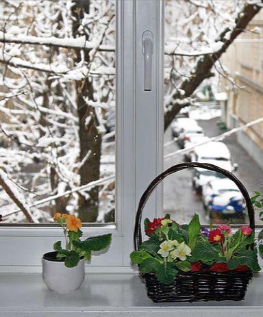 mojka-okon-zimoj